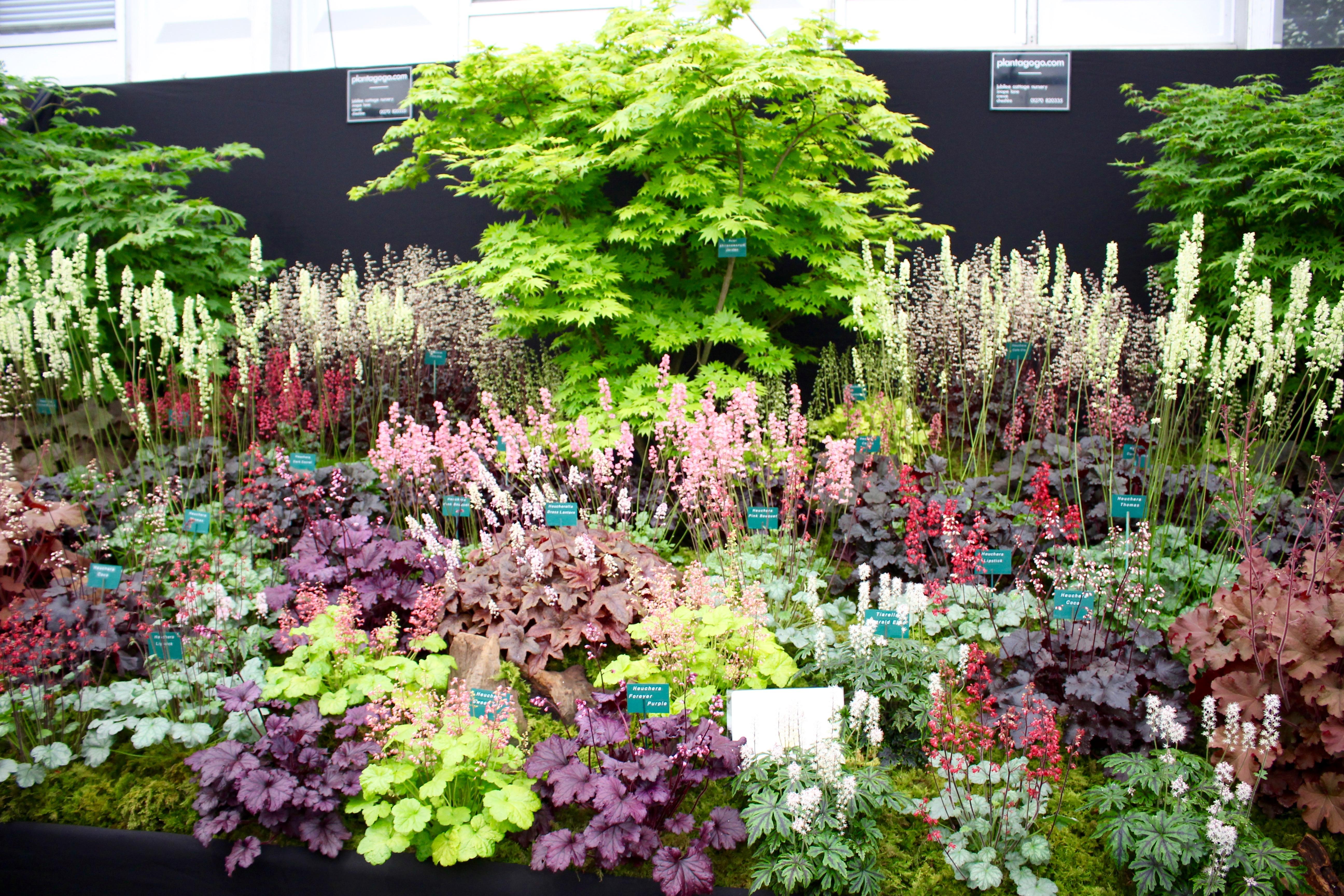Chelsea flower show yesterday