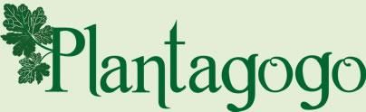 plantagogo